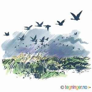 Trekkfugler – HØST
