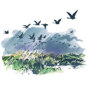 Trekkfugler - HØST
