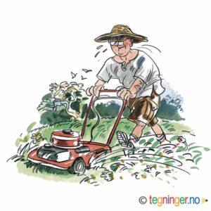 Klipper gress – SOMMER