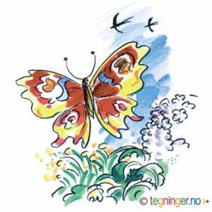 Sommerfugl – SOMMER