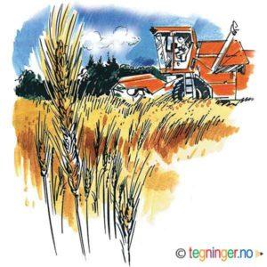 Høsting – HØST