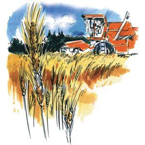 Høsting - HØST