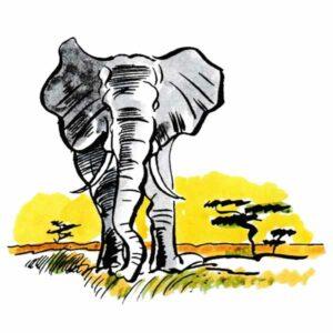 Afrikansk elefant på savannen – DYR