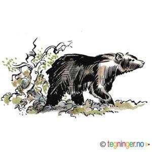 Bjørn – DYR