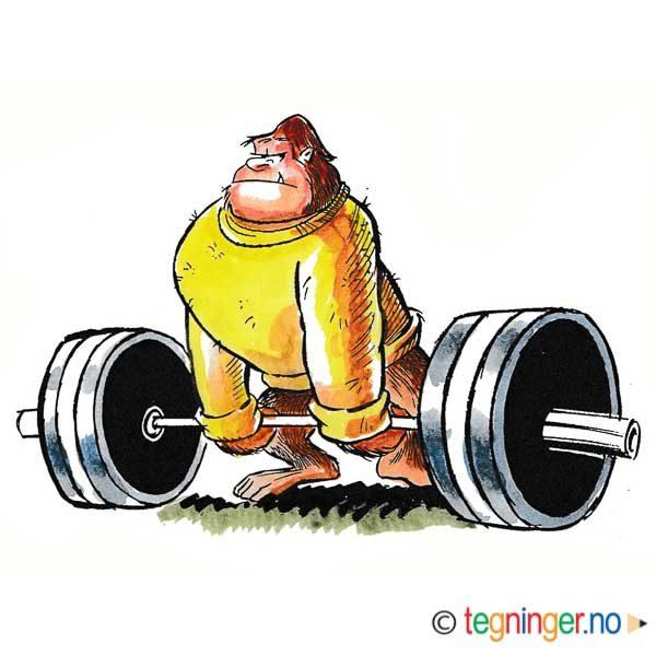 Gorilla som vektløfter – DYR