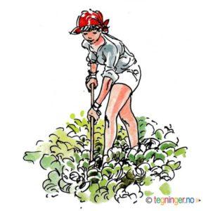 Dame i salatåkeren – SOMMER