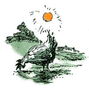 Høne i fri natur – DYR