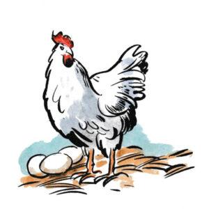 Høne med egg – DYR
