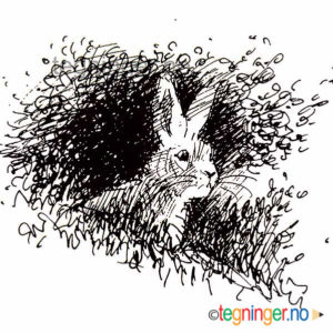 Hare - DYR