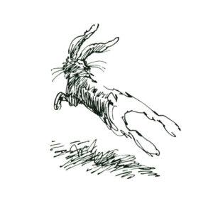 Hare – DYR