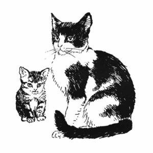 Katt – DYR