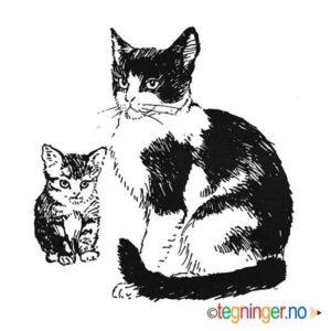 Katt - DYR