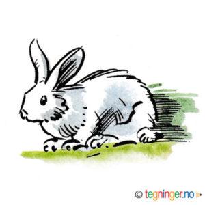 Kanin – DYR