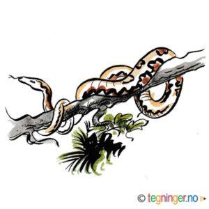 Kveleslange i et tre – DYR