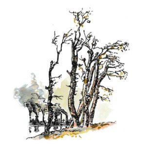 Døde trær og kullkraft – MILJØ