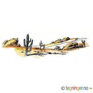 Ørkenlandskap med kaktus – NATUR