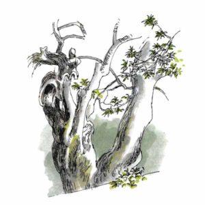 Gammelt oliventre – NATUR