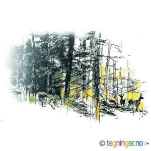 Hjorter i skogkanten – NATUR