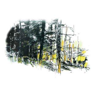 Hjort i skogkanten - NATUR