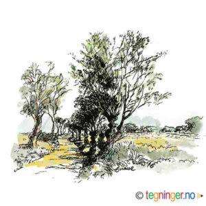 Landskap med sti – NATUR