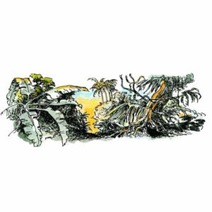 Tropisk regnskog – NATUR