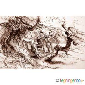 Skog på Hvaler – NATUR