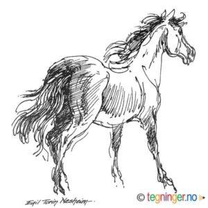 Hest – DYR