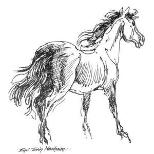 Hest - DYR