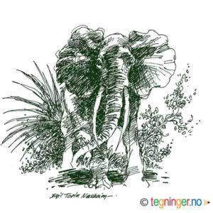 Elefant – NATUR