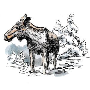 Elg i vinterlanskap – DYR