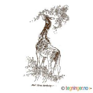 Giraff – DYR