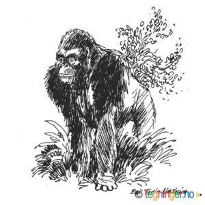Gorilla – DYR