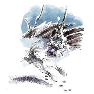 Hare ved skigard - KLASSIKER