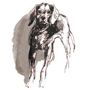 Hund – DYR