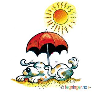 Hund i sommersol – SOMMER