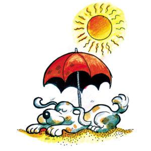Hund i sommersol - SOMMER