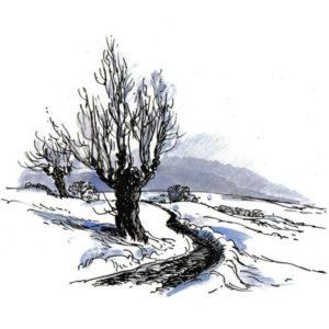 Natur med trær - VINTER